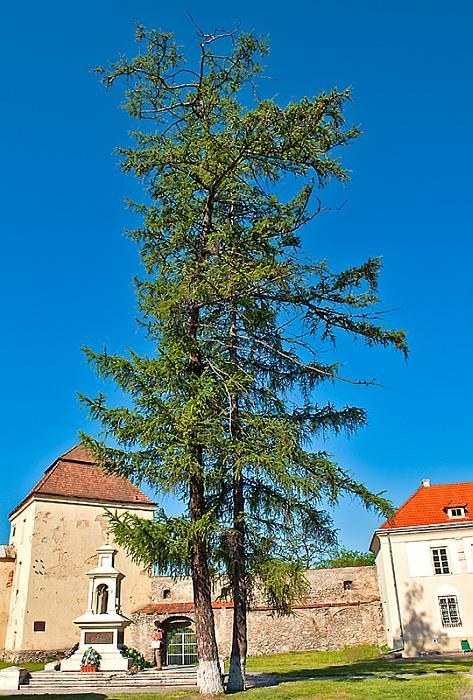 Larch Trees and Castle