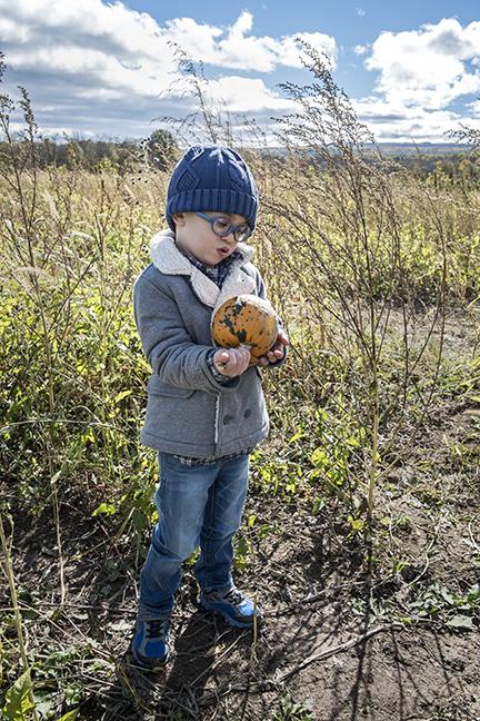 Picking Pumpkins