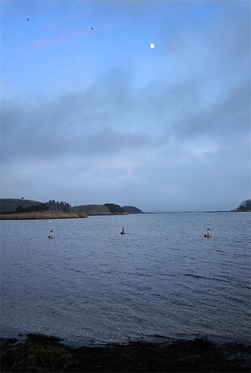Swan Lake / Svanesøen