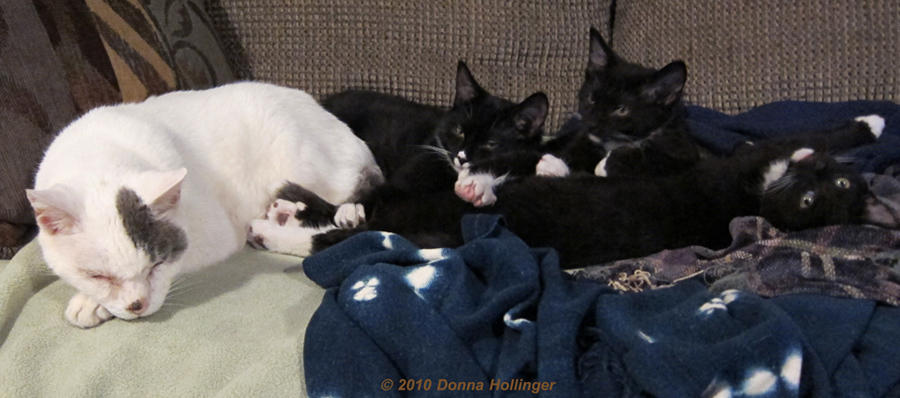 Sleeping Together: Ching and the kittens