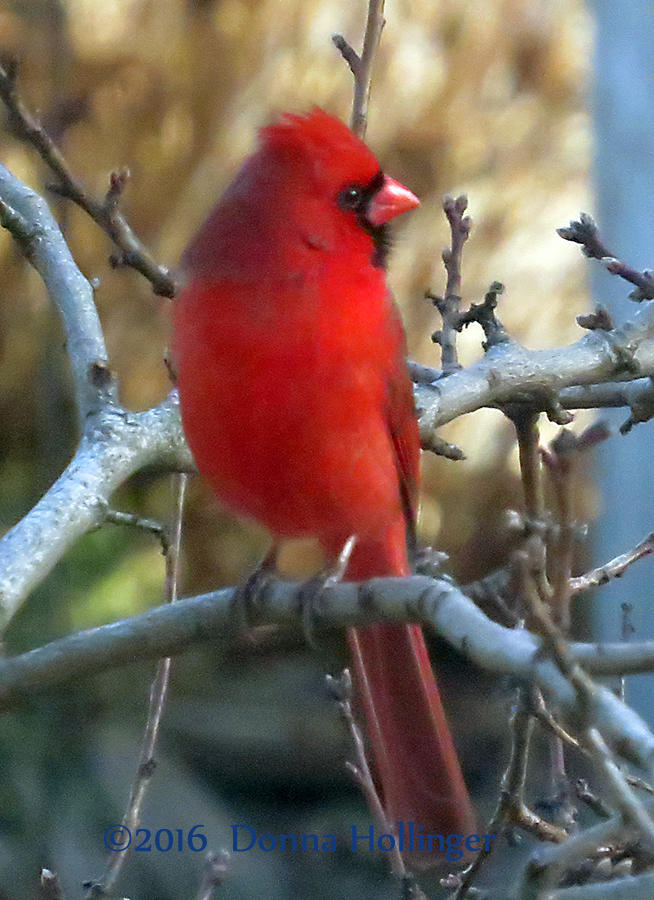 The Cardinal Next Door