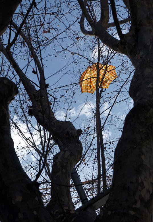 paraguas en el árbol