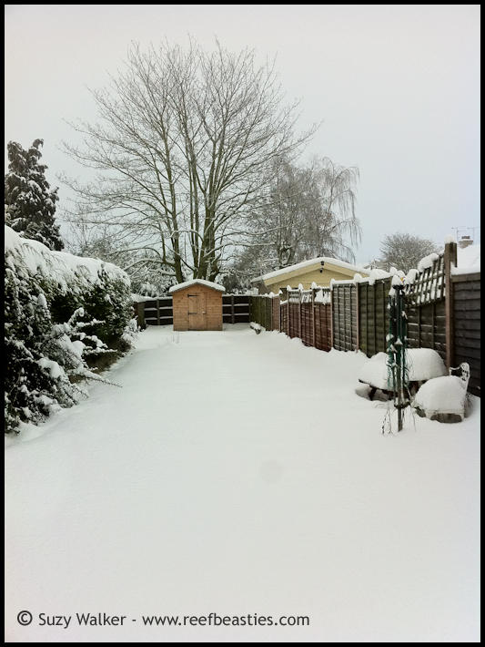 Snow covered garden