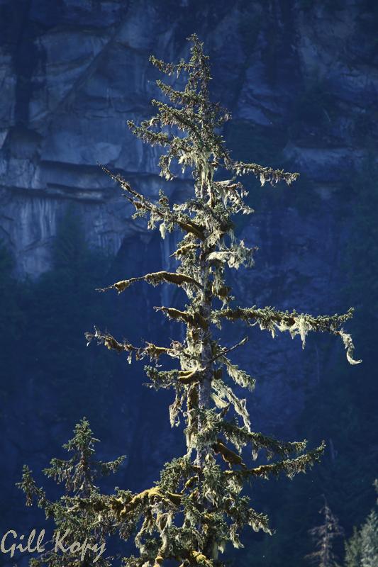 Lonesome tree.jpg