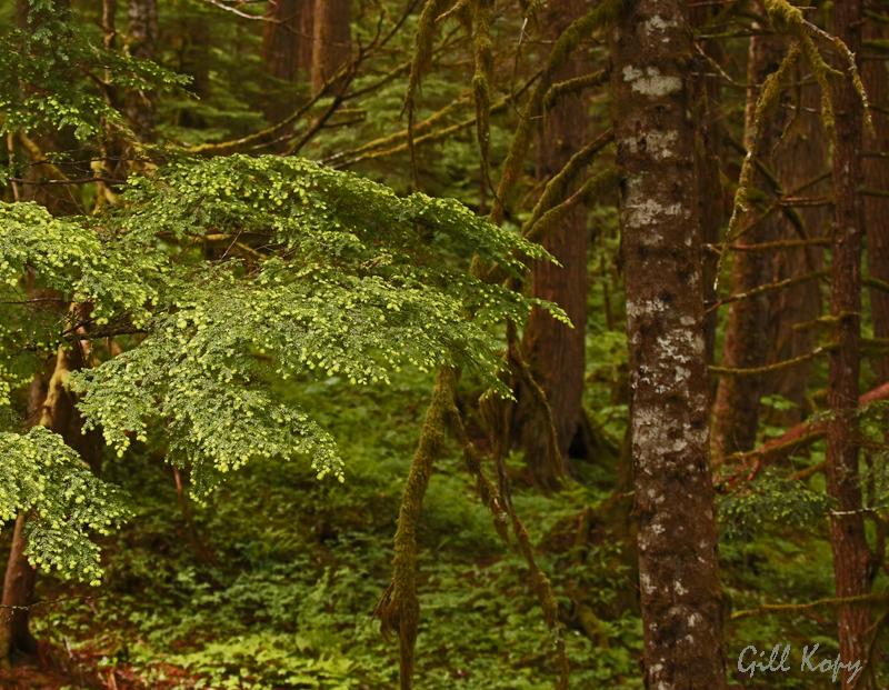 Rain Forest3.jpg