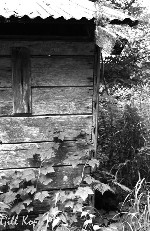 Ghosts house.jpg