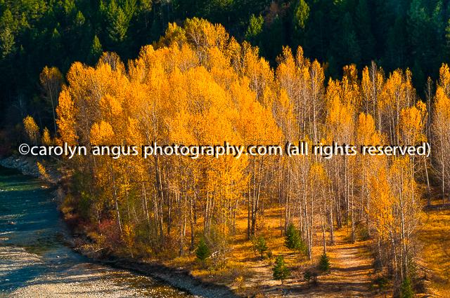 IMGP5205-Edit.jpg