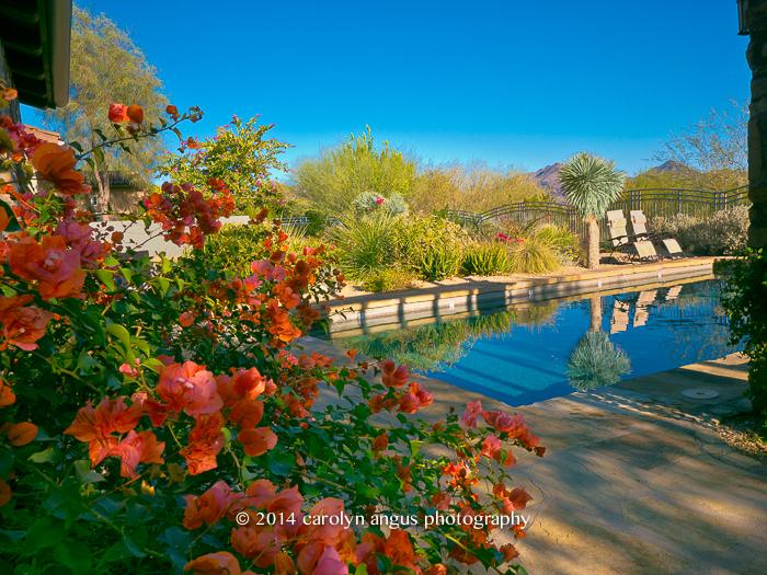 Arizona Chilling-2