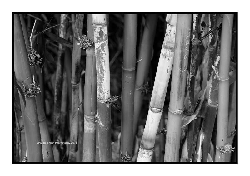 Botanical 5