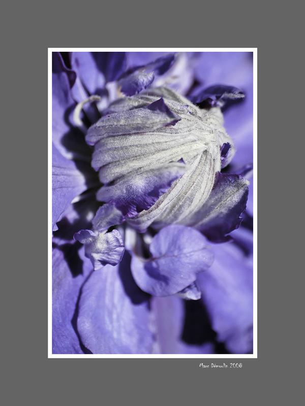Floral 55