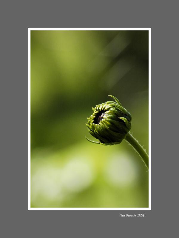 Floral 60