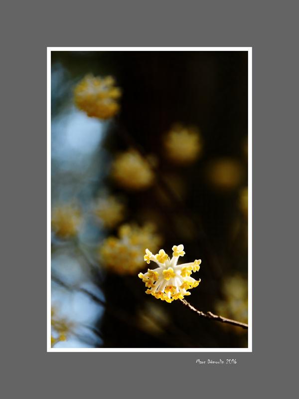 Floral 64
