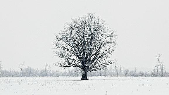 Winter Lone Tree DSCF0613