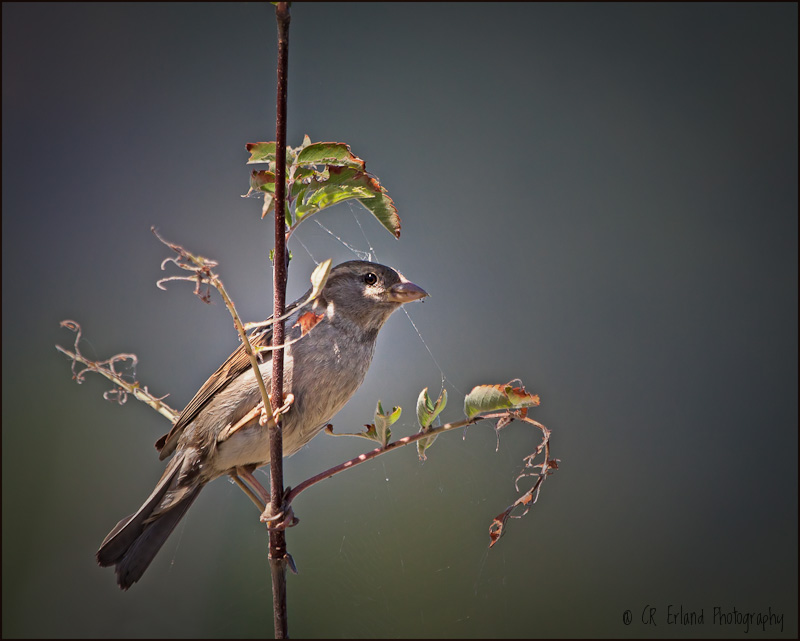 Perched on a Branch