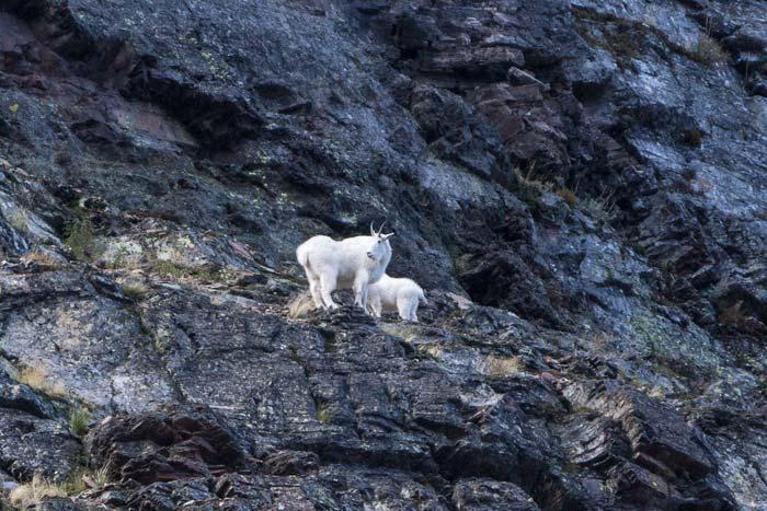 Glacier National Park 91