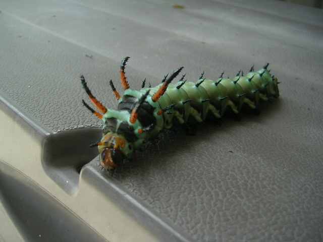 Back home this giant caterpillar greeted us