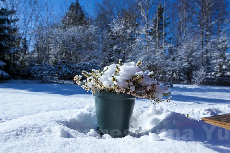 Spring is delayed this weekend
