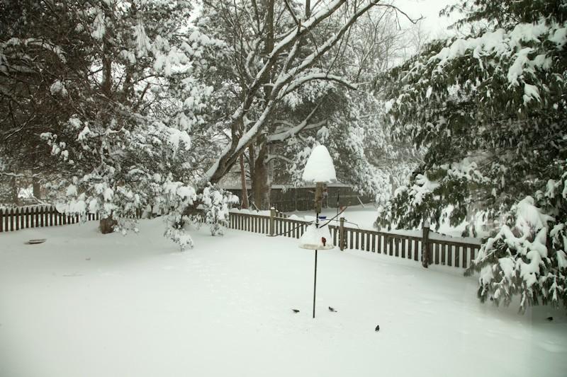 Our Backyard