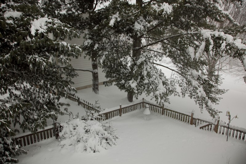 Looking down on the back yard