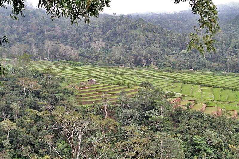 Terrace paddies