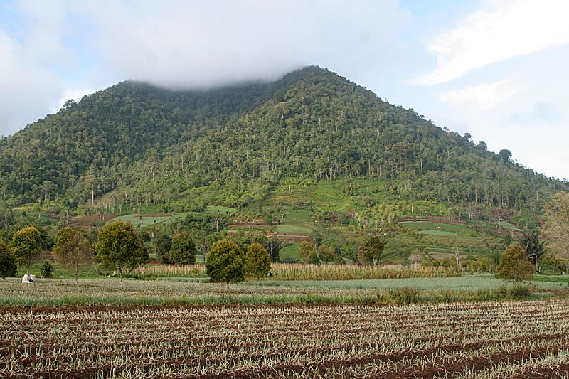 Gunung Ambung