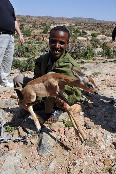 Very unhappy baby gazelle