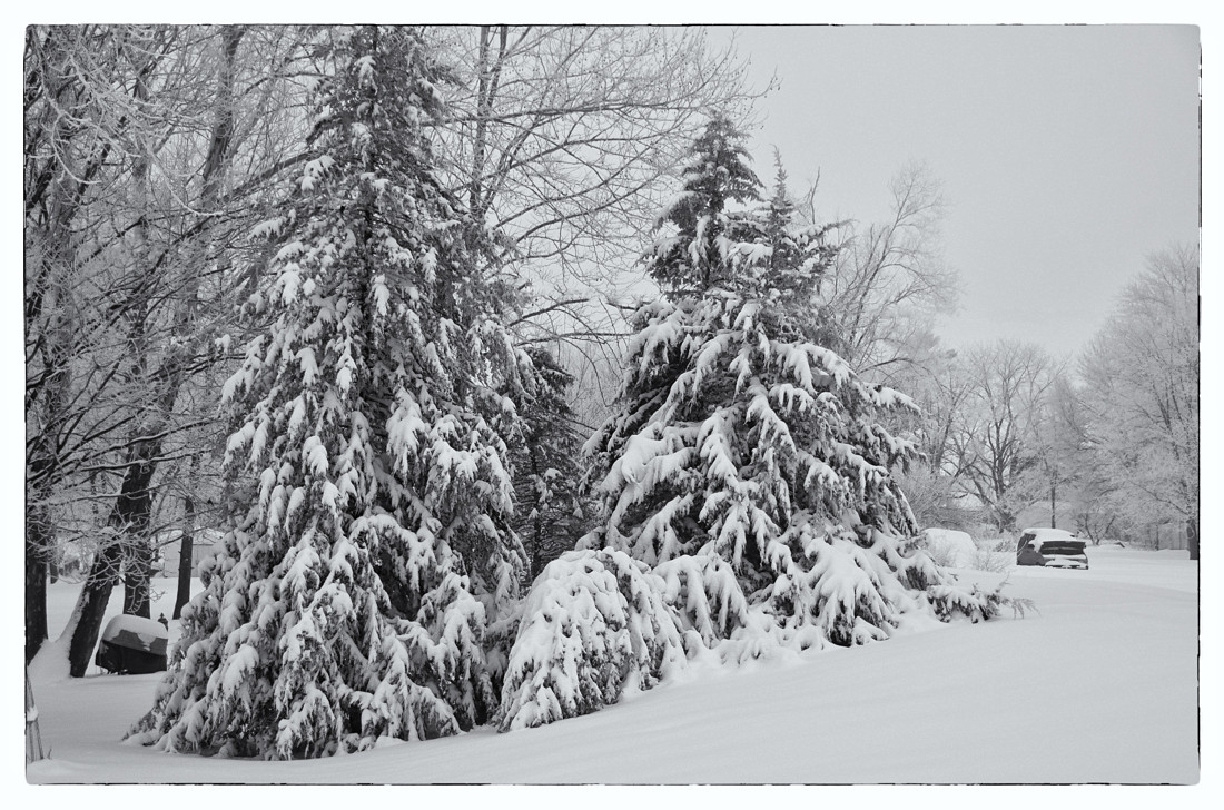 Winter 2008 with Evergreens