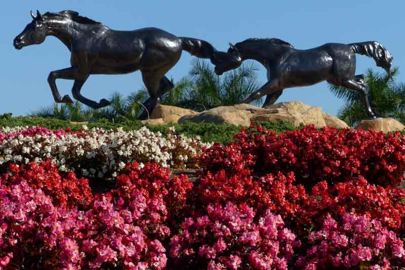 The Lely Freedom Horses #2