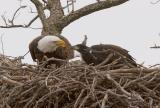 Eagles 2006