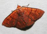 moth 6