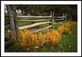 Fall Fern Color