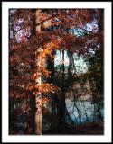 Sun on Winter Leaves