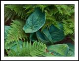 Hostas and Ferns