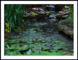 Rainy Day Pond-crop