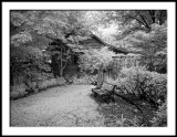 Woodland Garden Corner in IR