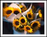 Farmers Market Sunflowers
