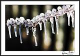 Icey Branches