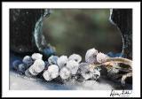 Frozen Pokeberries
