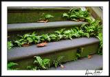 Stairs/Ferns/Leaves