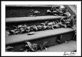 Stairs/Ferns/Leaves Mono