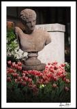 Bust with Tulips