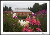 Biltmore Greenhouse Framed