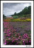 Stormy Biltmore Garden 2
