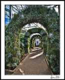 Orchid House Arches