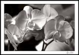 Orchids/macro