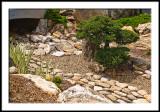 Small Bonsai Landscape