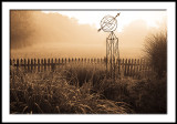 Foggy Morning Pasture