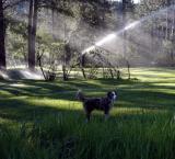 Golf Course Morning