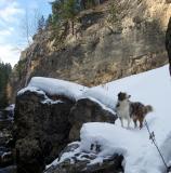 Canyon Dog