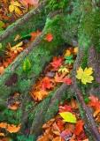 Wet Leaves & Moss  #  0510